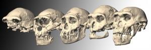 Dmanisi_skulls-300x100