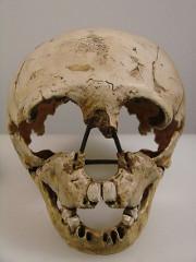 Gibraltar 2 skull