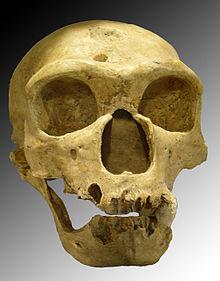 tick borws evidence that our ancestors lived for eons